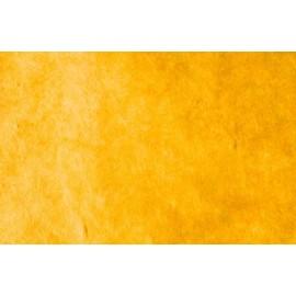 Népalais jaune d'or